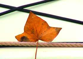 Leaf on deck of sea kayak