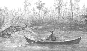 Nathaniel Bishop's paper canoe